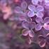 Оладушки с вишневым вареньем - рецепт пошаговый с фото